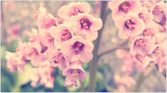 incredible-vintage-pink-flower-photography-hd-pict-for-lavender-trend-and-hue-inspiration